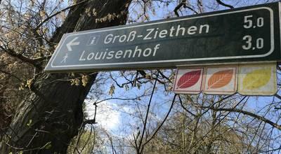 Mehr zu Rundwanderung Rotes Buchenblatt am Weltnaturerbe Buchenwald Grumsin