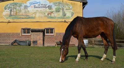 Mehr zu Reiterhof und Pension - Bauernhof Gierke in Drense